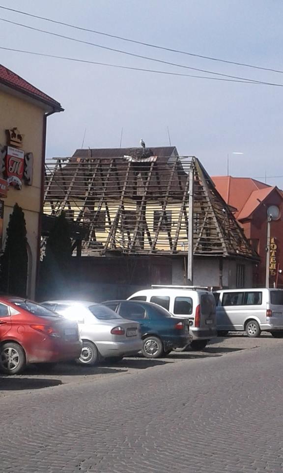 На Закарпатті під час знесення старого будинку врятували гніздо лелек (ФОТО), фото-5