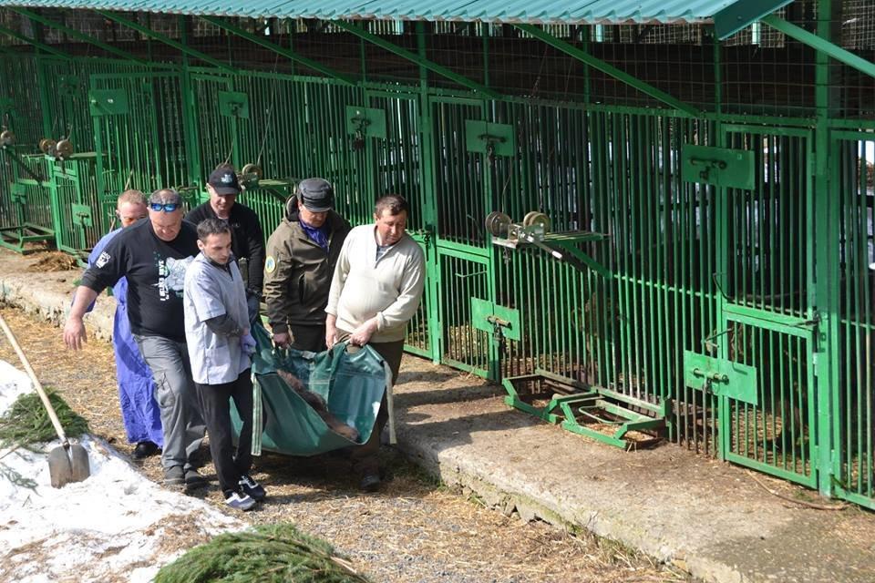 На Закарпатті до синевирських ведмедів приїхали лікарі - лікувати зуби (ФОТО), фото-4
