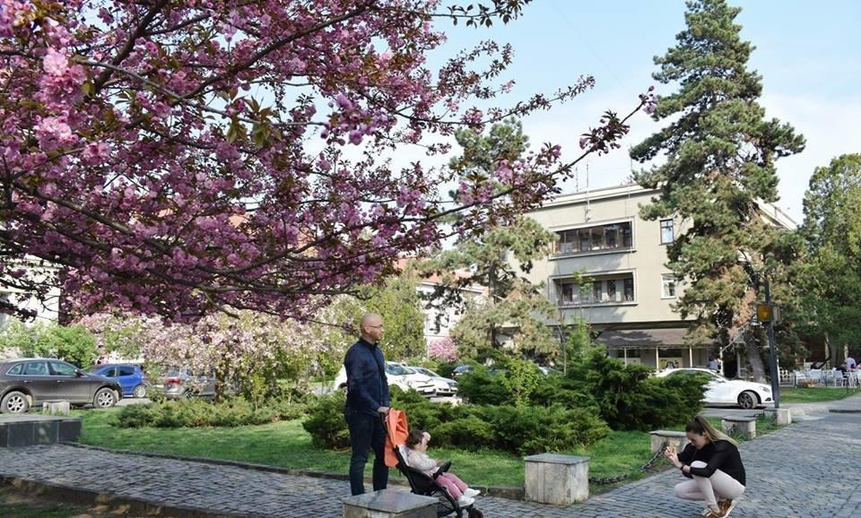 """12 квітня - старт традиційного фестивалю """"Сакура-Фест"""" , фото-5"""