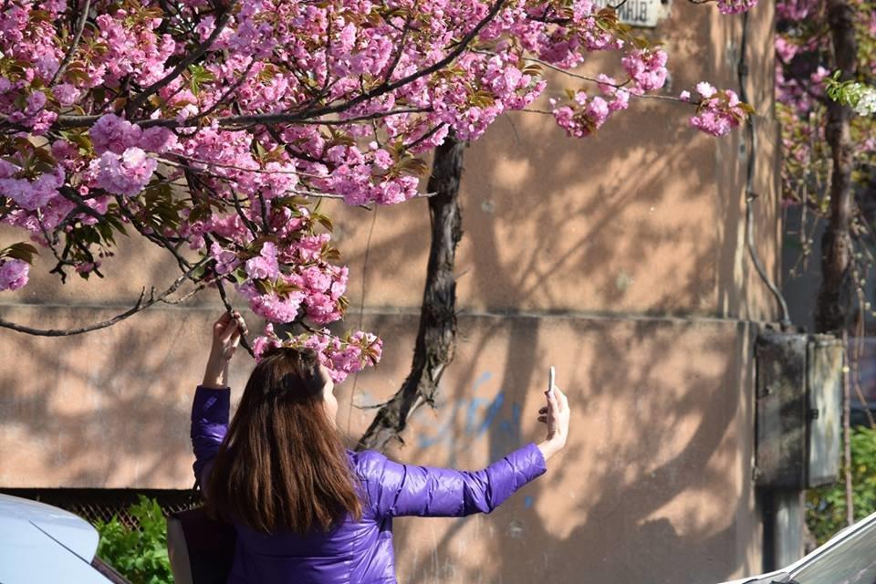 """12 квітня - старт традиційного фестивалю """"Сакура-Фест"""" , фото-4"""