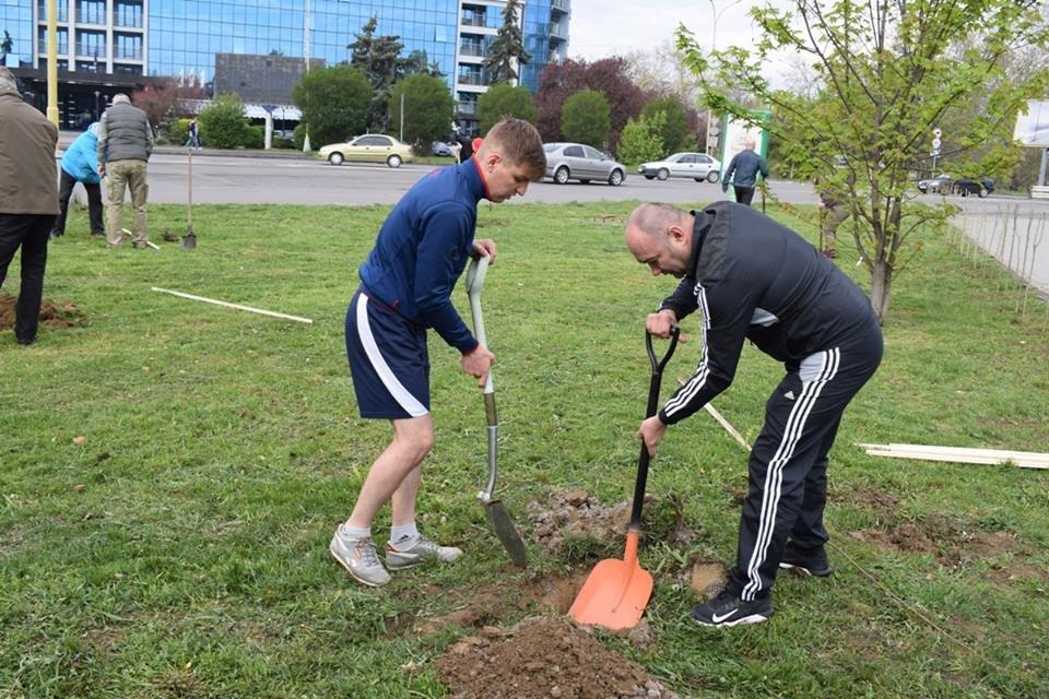 На вулиці Богдана Хмельницького в Ужгороді  висадили 35 молодих дерев (ФОТО), фото-3