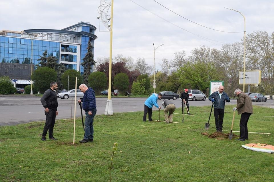 На вулиці Богдана Хмельницького в Ужгороді  висадили 35 молодих дерев (ФОТО), фото-1