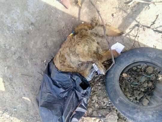 Зоозахисники стурбовані через знайдені тіла собак на вулицях міста (ФОТО 18+), фото-3