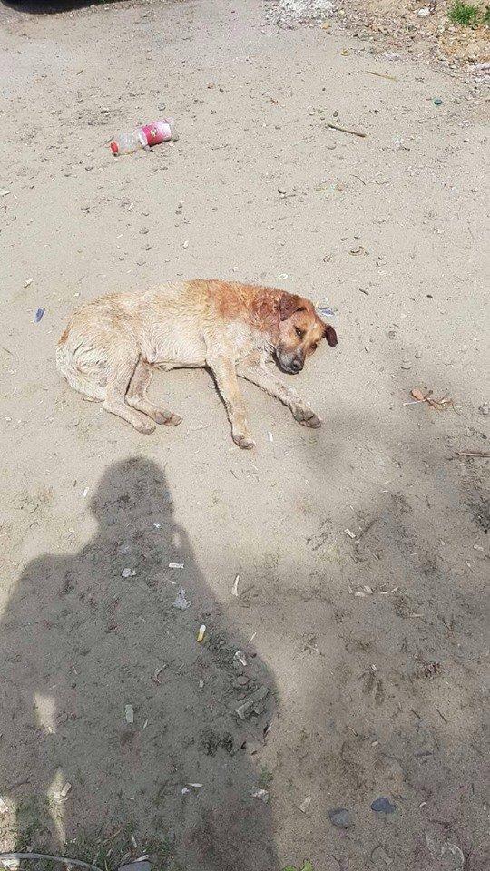 Зоозахисники стурбовані через знайдені тіла собак на вулицях міста (ФОТО 18+), фото-6