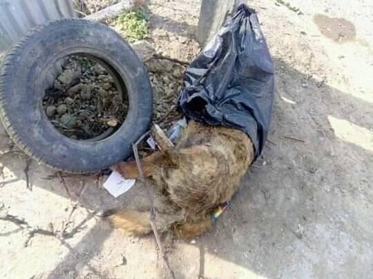Зоозахисники стурбовані через знайдені тіла собак на вулицях міста (ФОТО 18+), фото-2