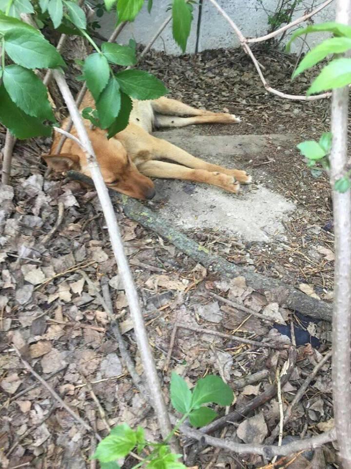 Зоозахисники стурбовані через знайдені тіла собак на вулицях міста (ФОТО 18+), фото-1