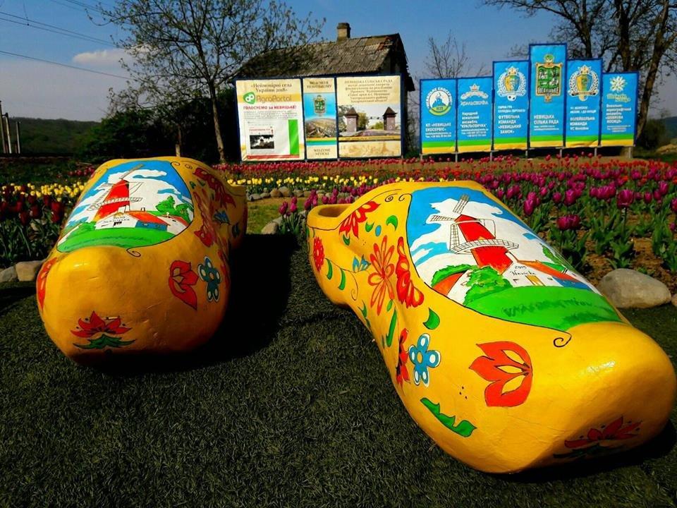 Маленький Амстердам: Під Ужгородом розквітло тюльпанове поле (ФОТО, ВІДЕО) , фото-8