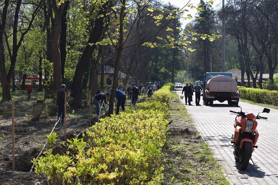 В Боздоському парку в Ужгороді висадили алею платанів (ФОТО), фото-4