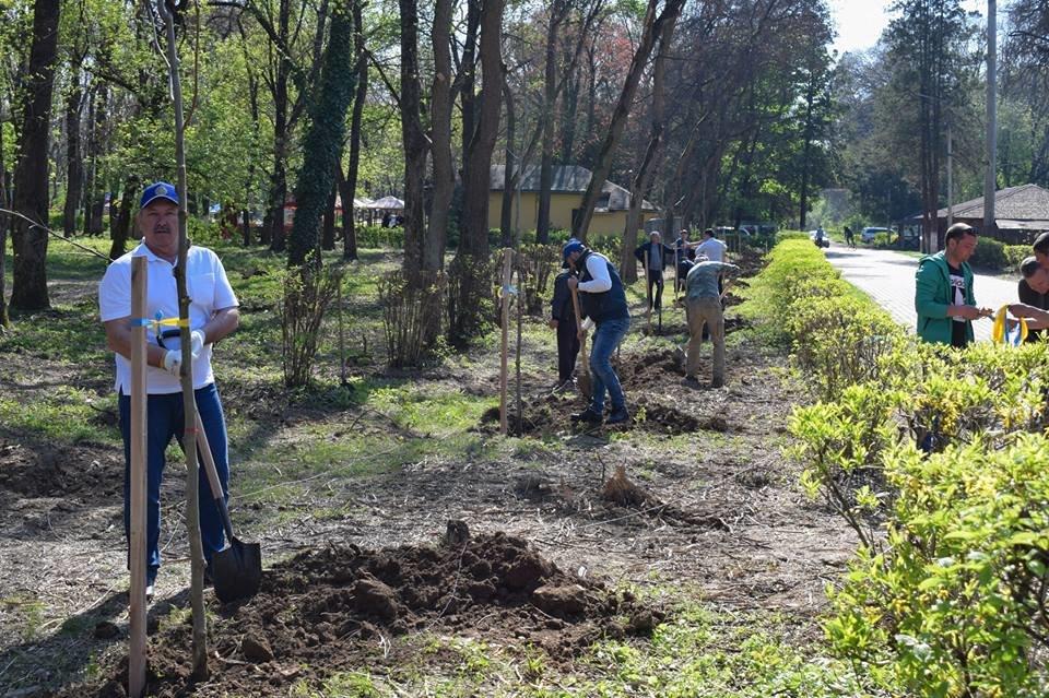 В Боздоському парку в Ужгороді висадили алею платанів (ФОТО), фото-1
