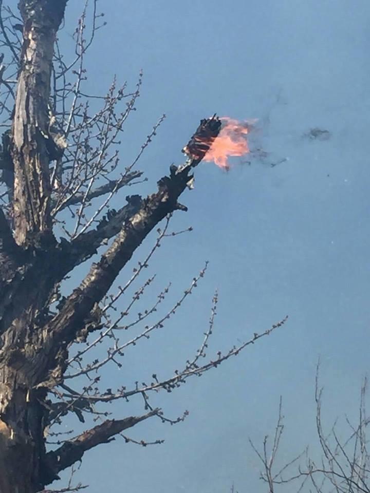 Вбивчий вогонь: рятувальники Закарпаття показали тварин, які загинули від пожеж сухостою (ФОТО18+), фото-7