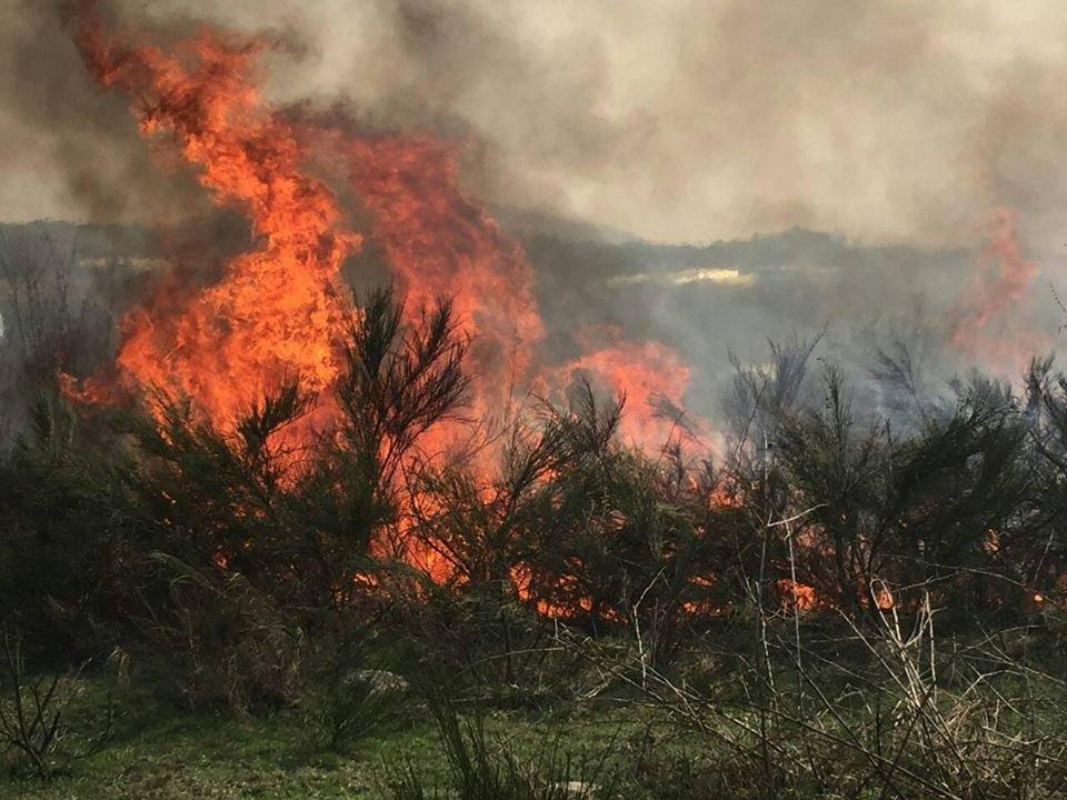 Вбивчий вогонь: рятувальники Закарпаття показали тварин, які загинули від пожеж сухостою (ФОТО18+), фото-6
