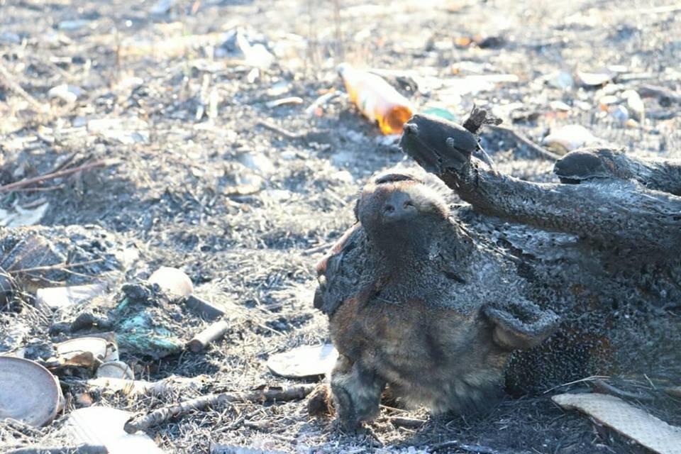 Вбивчий вогонь: рятувальники Закарпаття показали тварин, які загинули від пожеж сухостою (ФОТО18+), фото-5