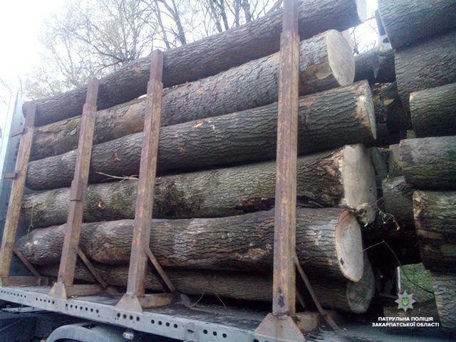 На Закарпатті зупинили вантажівку, що незаконно перевозила деревину (ФОТО), фото-2