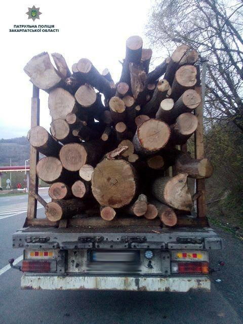 На Закарпатті зупинили вантажівку, що незаконно перевозила деревину (ФОТО), фото-3