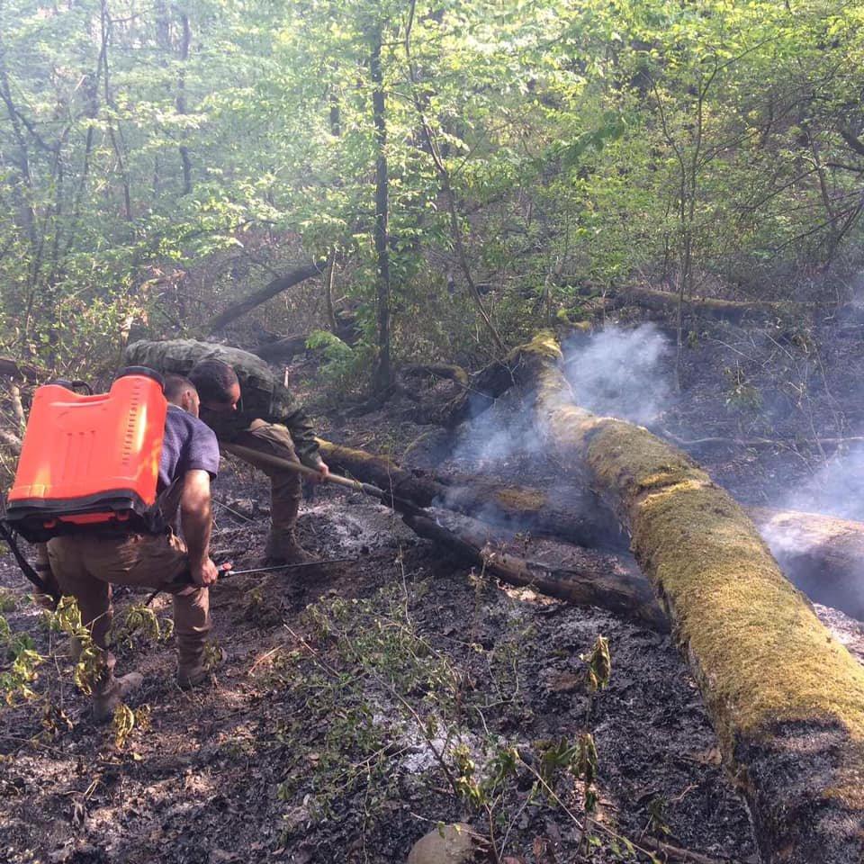На Ужгородщині горів ліс - підозрюють підпал (ФОТО), фото-2