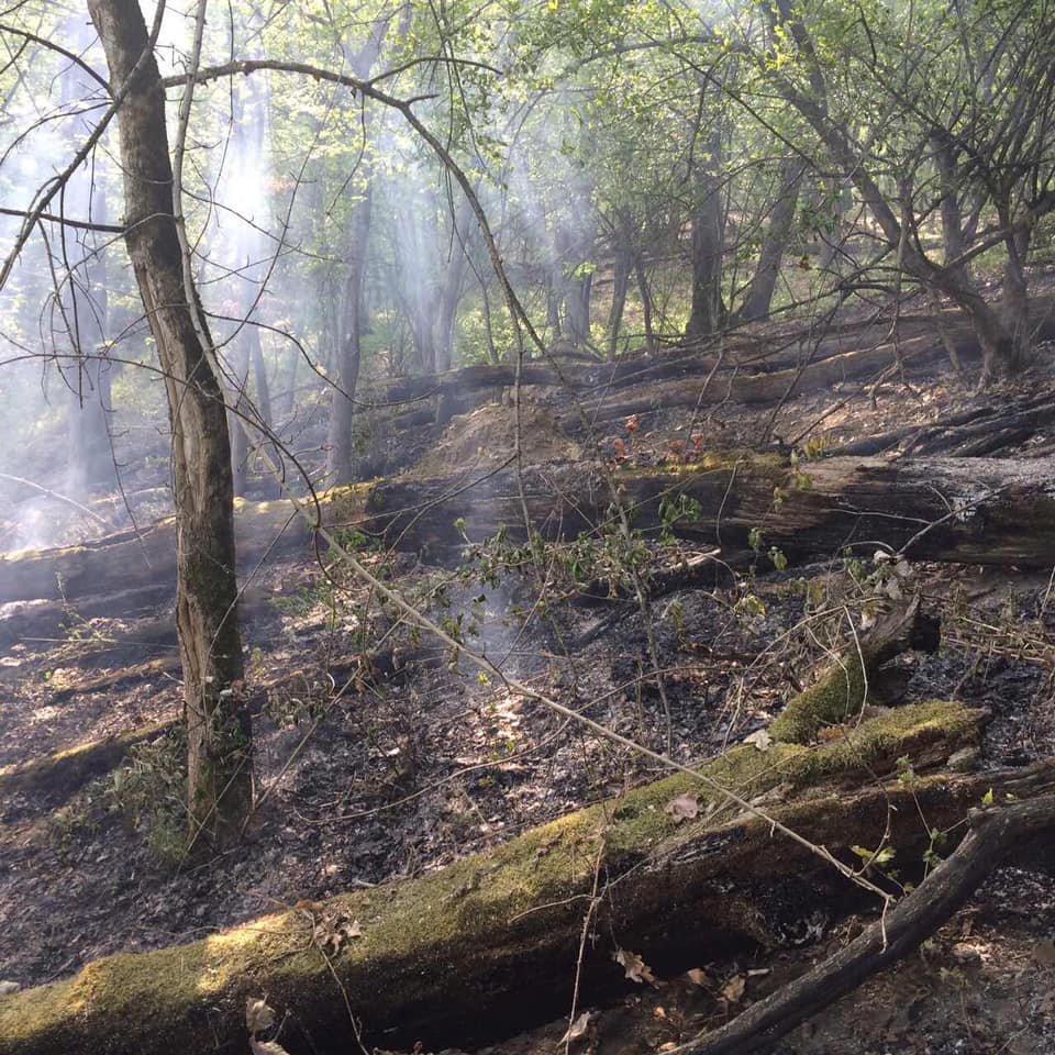 На Ужгородщині горів ліс - підозрюють підпал (ФОТО), фото-3