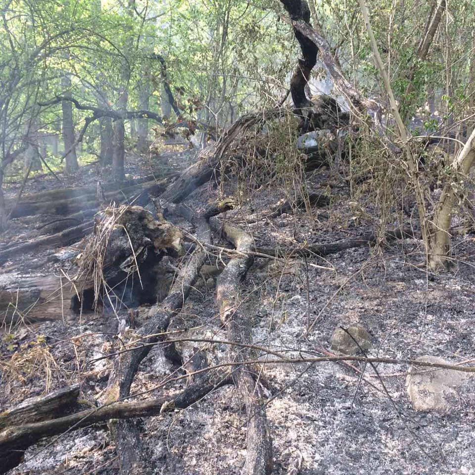 На Ужгородщині горів ліс - підозрюють підпал (ФОТО), фото-4
