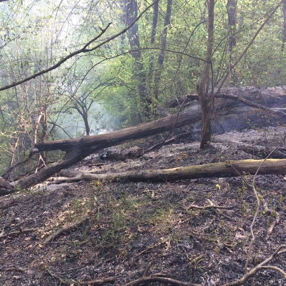 На Ужгородщині горів ліс - підозрюють підпал (ФОТО), фото-5