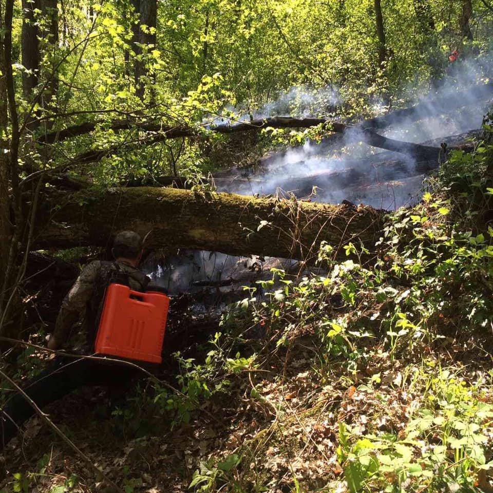 На Ужгородщині горів ліс - підозрюють підпал (ФОТО), фото-6