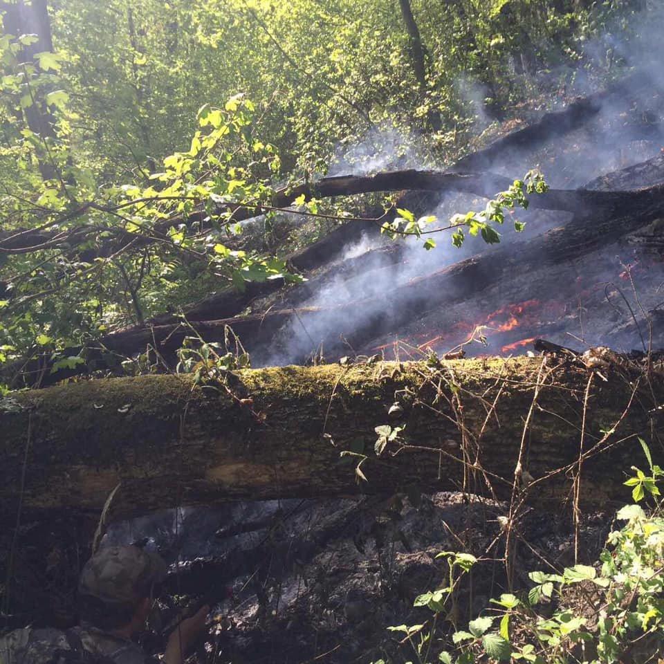 На Ужгородщині горів ліс - підозрюють підпал (ФОТО), фото-8