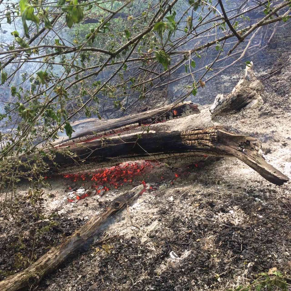 На Ужгородщині горів ліс - підозрюють підпал (ФОТО), фото-1