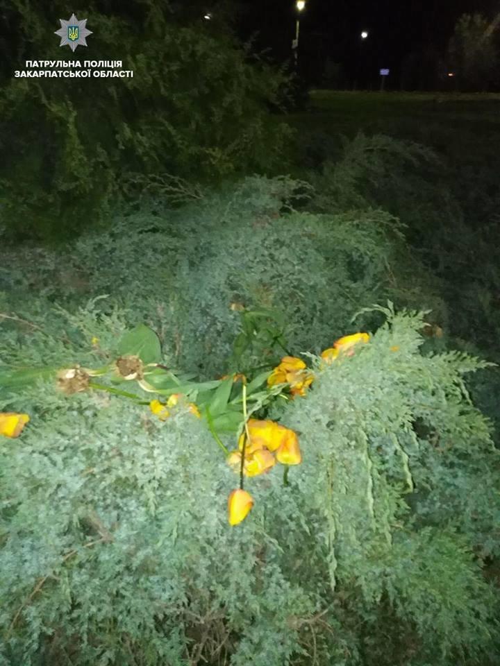 В Ужгороді затримали підлітка, котрий понищив тюльпани на площі (ФОТО), фото-2