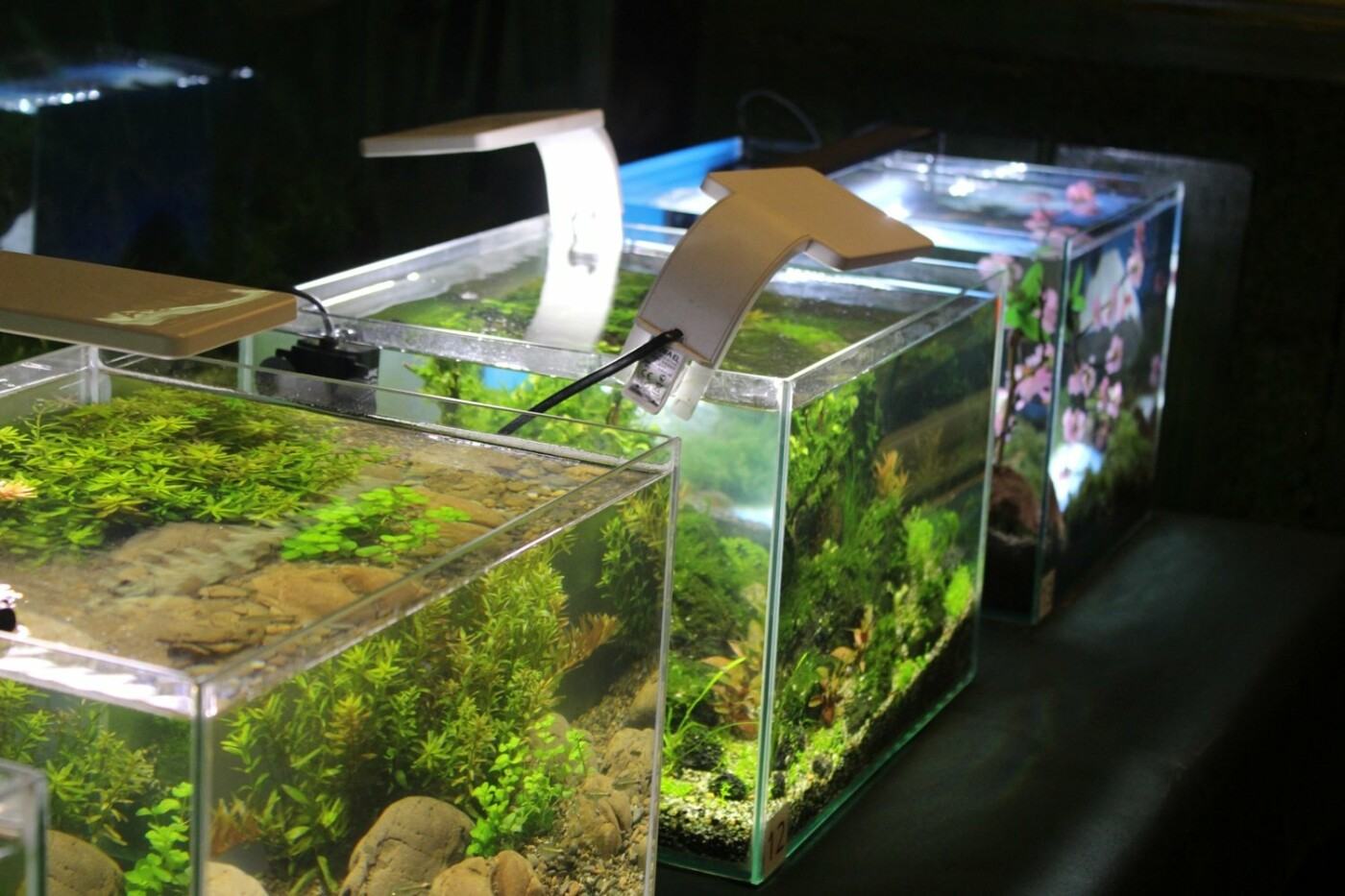 В Ужгороді відкрилась виставка нано-акваріумів з весняними мотивами (ФОТО), фото-1