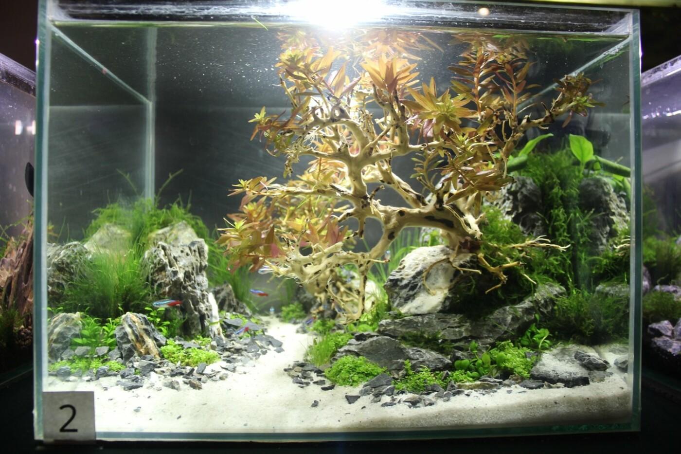 В Ужгороді відкрилась виставка нано-акваріумів з весняними мотивами (ФОТО), фото-7
