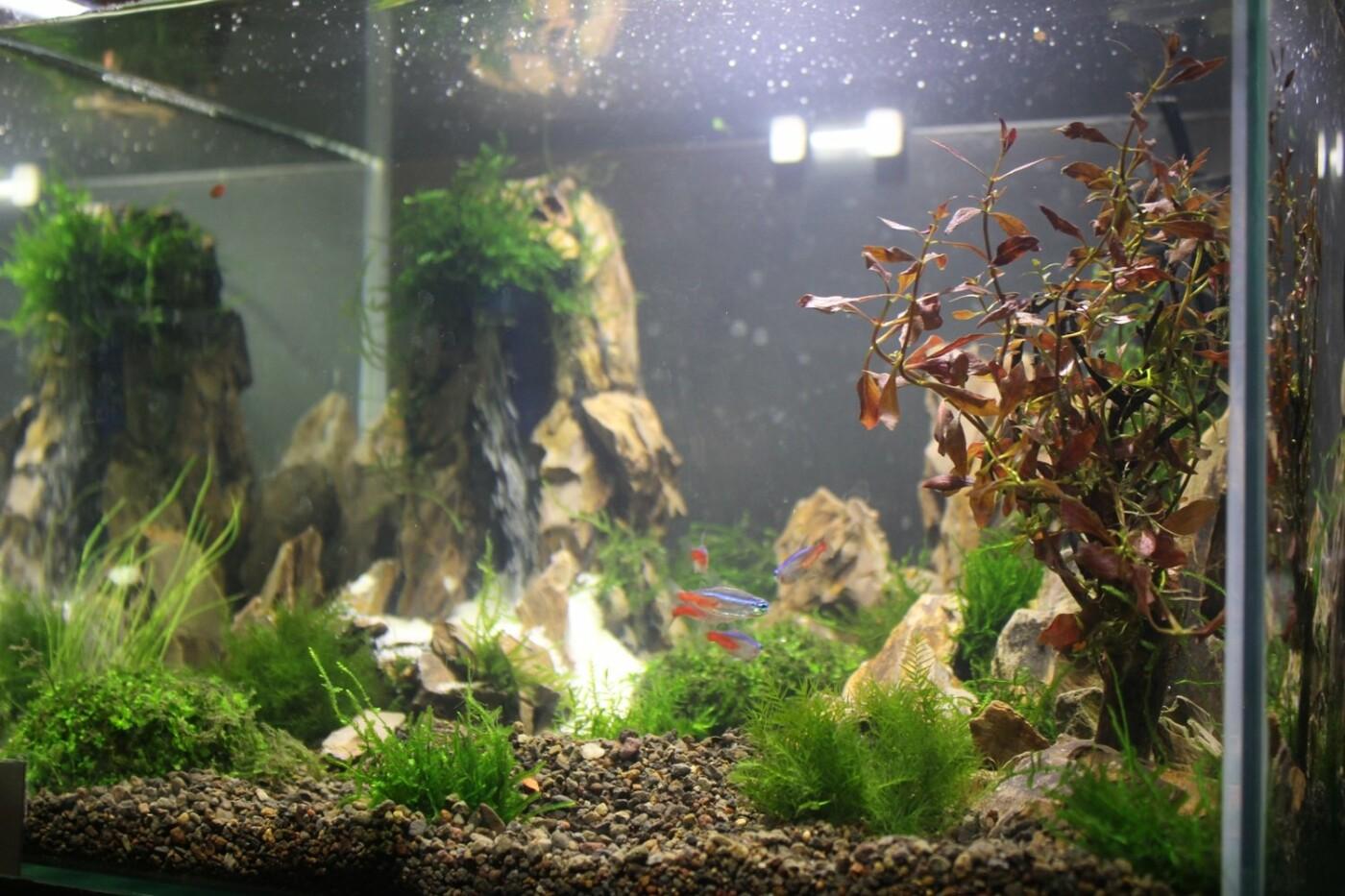 В Ужгороді відкрилась виставка нано-акваріумів з весняними мотивами (ФОТО), фото-8