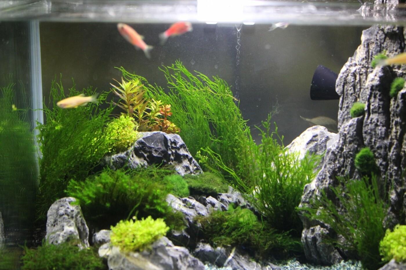 В Ужгороді відкрилась виставка нано-акваріумів з весняними мотивами (ФОТО), фото-9