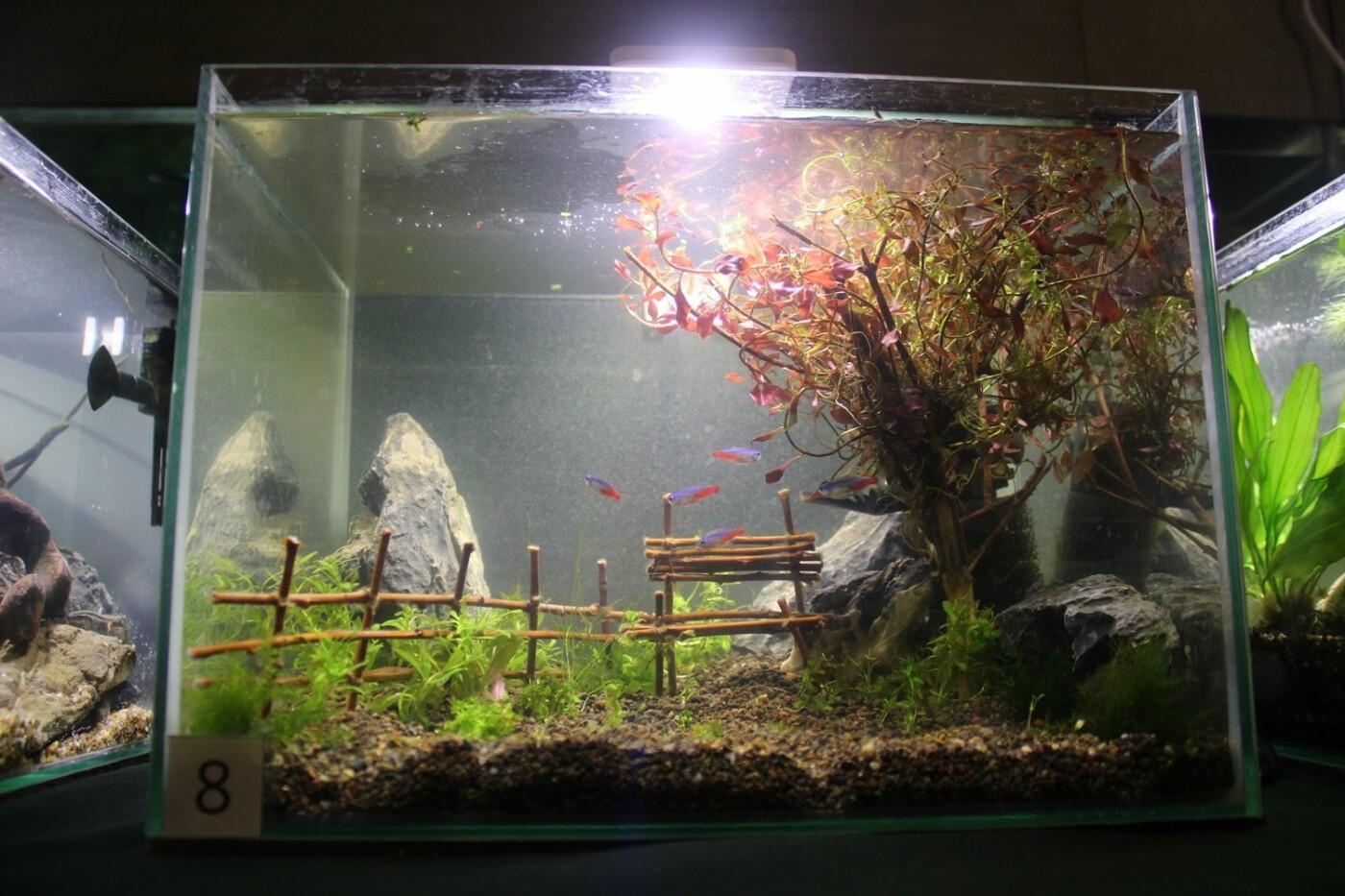 В Ужгороді відкрилась виставка нано-акваріумів з весняними мотивами (ФОТО), фото-10