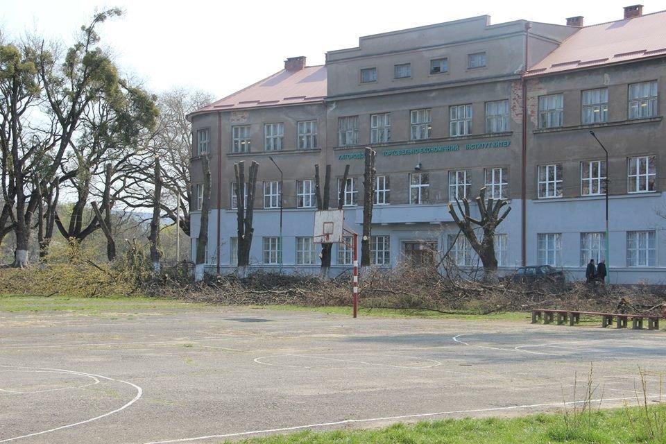 В Ужгороді подали петицію з вимогою зупинити знищення зелених насаджень - триває збір підписів, фото-1