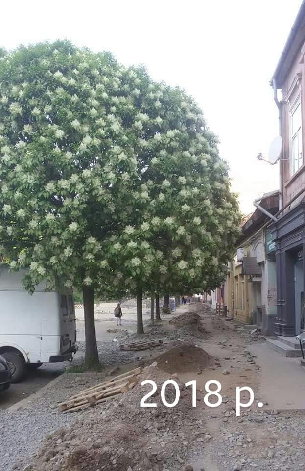 В Ужгороді подали петицію з вимогою зупинити знищення зелених насаджень - триває збір підписів, фото-2