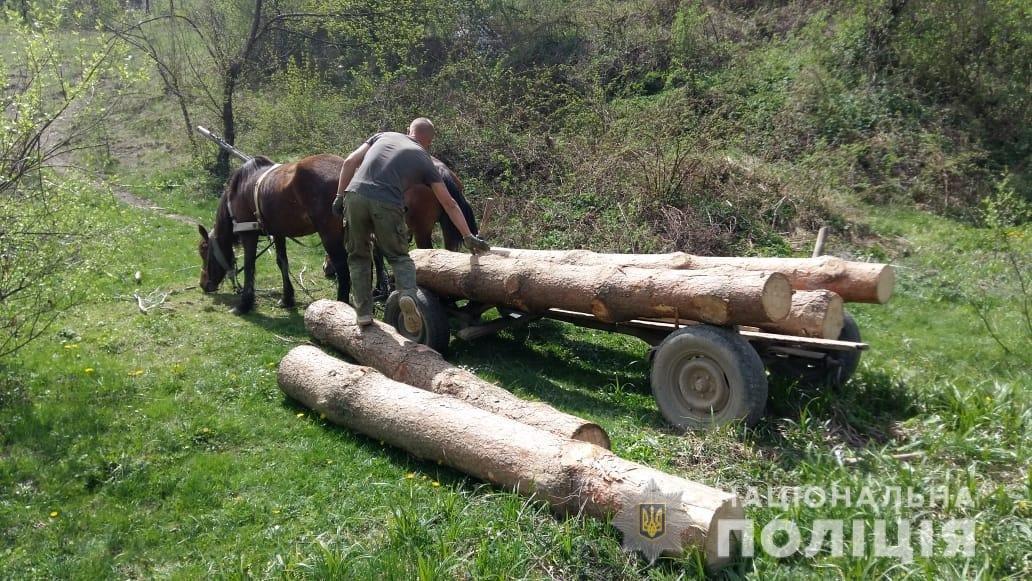 Двох закарпатців застали за незаконною вирубкою та вивезенням деревини (ФОТО), фото-1