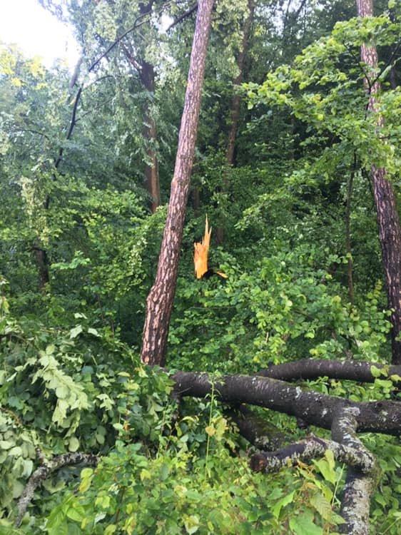 У мережі показали наслідки буревію в Хусті, який повалив десятки дерев та 20-тонну трубу (ФОТО, ВІДЕО), фото-2