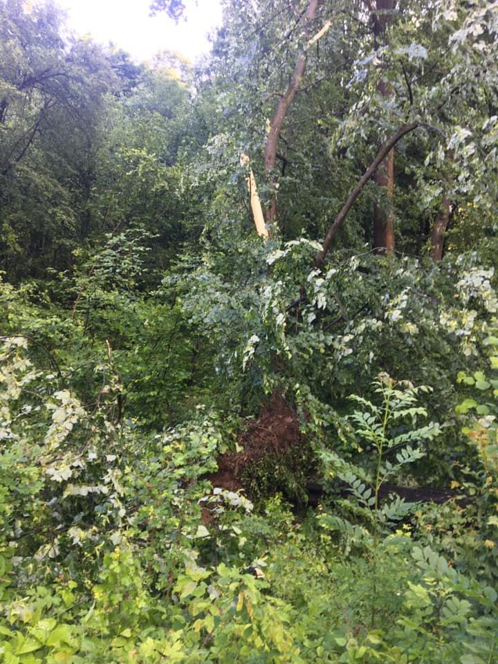 У мережі показали наслідки буревію в Хусті, який повалив десятки дерев та 20-тонну трубу (ФОТО, ВІДЕО), фото-1