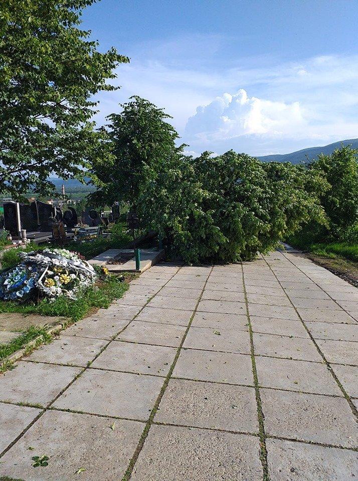 У мережі показали наслідки буревію в Хусті, який повалив десятки дерев та 20-тонну трубу (ФОТО, ВІДЕО), фото-9