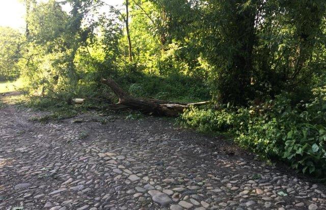 У мережі показали наслідки буревію в Хусті, який повалив десятки дерев та 20-тонну трубу (ФОТО, ВІДЕО), фото-7