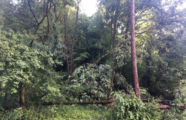 У мережі показали наслідки буревію в Хусті, який повалив десятки дерев та 20-тонну трубу (ФОТО, ВІДЕО), фото-6