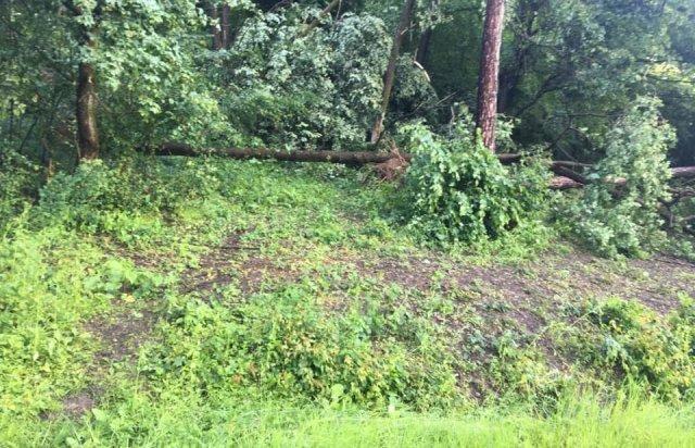 У мережі показали наслідки буревію в Хусті, який повалив десятки дерев та 20-тонну трубу (ФОТО, ВІДЕО), фото-5