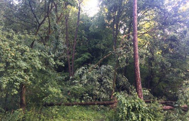 У мережі показали наслідки буревію в Хусті, який повалив десятки дерев та 20-тонну трубу (ФОТО, ВІДЕО), фото-4