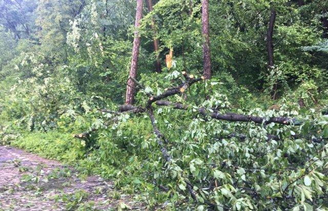 У мережі показали наслідки буревію в Хусті, який повалив десятки дерев та 20-тонну трубу (ФОТО, ВІДЕО), фото-3