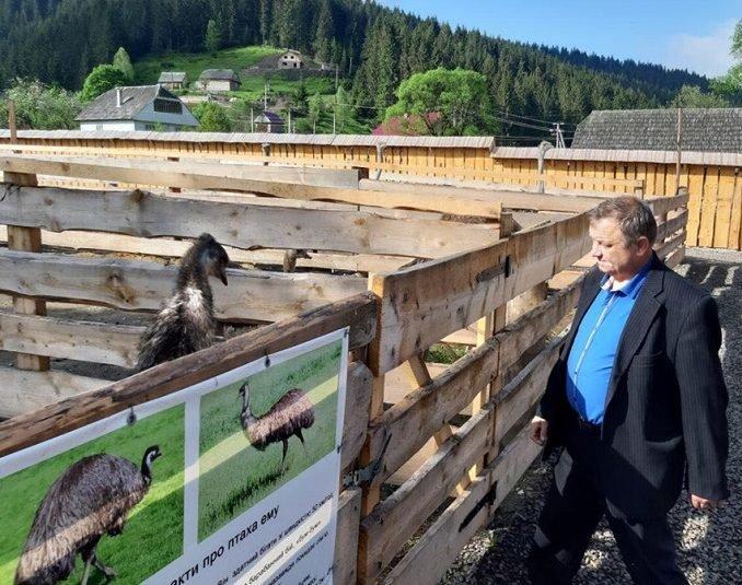 """На Закарпатті недалеко від озера """"Синевир"""" відкрилась страусина ферма (ФОТО), фото-3"""