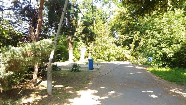 В ужгородському парку впало велике дерево, обірвавши електричний провід (ФОТО), фото-3