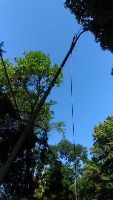 В ужгородському парку впало велике дерево, обірвавши електричний провід (ФОТО), фото-4