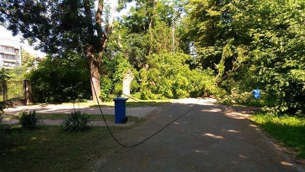 В ужгородському парку впало велике дерево, обірвавши електричний провід (ФОТО), фото-2