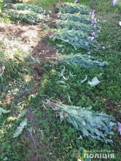 З присадибної ділянки 53-річної закарпатки правоохоронці вилучили 380 рослин маку (ФОТО) , фото-2