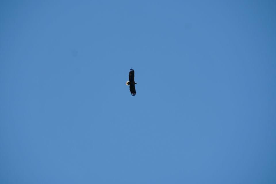 Закарпатські лісівники знайшли гніздо рідкісного для Карпат птаха (ФОТО), фото-3