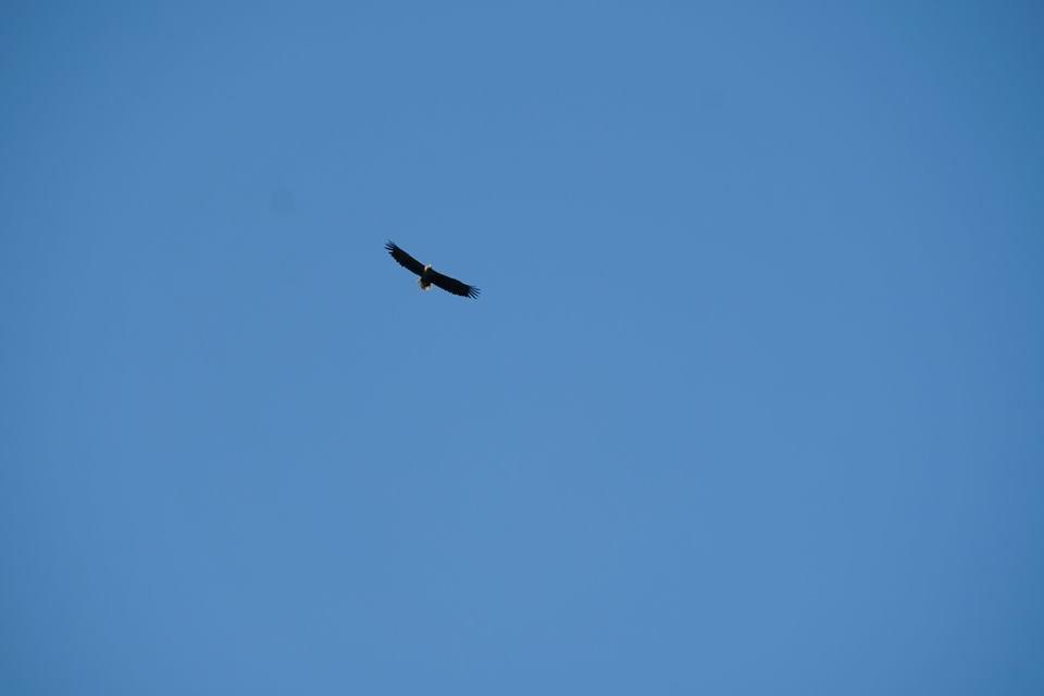 Закарпатські лісівники знайшли гніздо рідкісного для Карпат птаха (ФОТО), фото-2