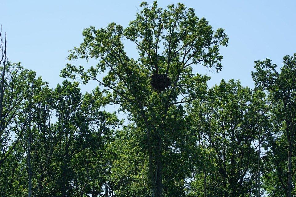 Закарпатські лісівники знайшли гніздо рідкісного для Карпат птаха (ФОТО), фото-1